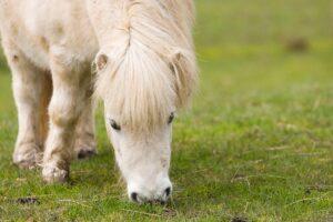 A Shetland Pony like Three #DancePonyDance Star